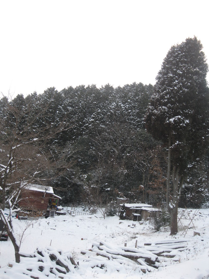 雪景色_a0125419_1125439.jpg