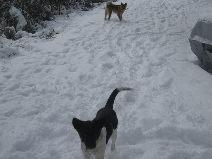 雪景色_a0125419_1125892.jpg