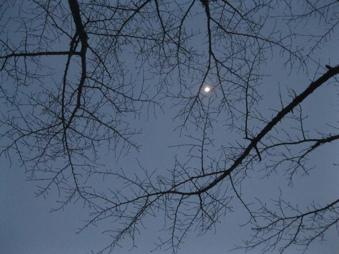 雪景色_a0125419_1129747.jpg
