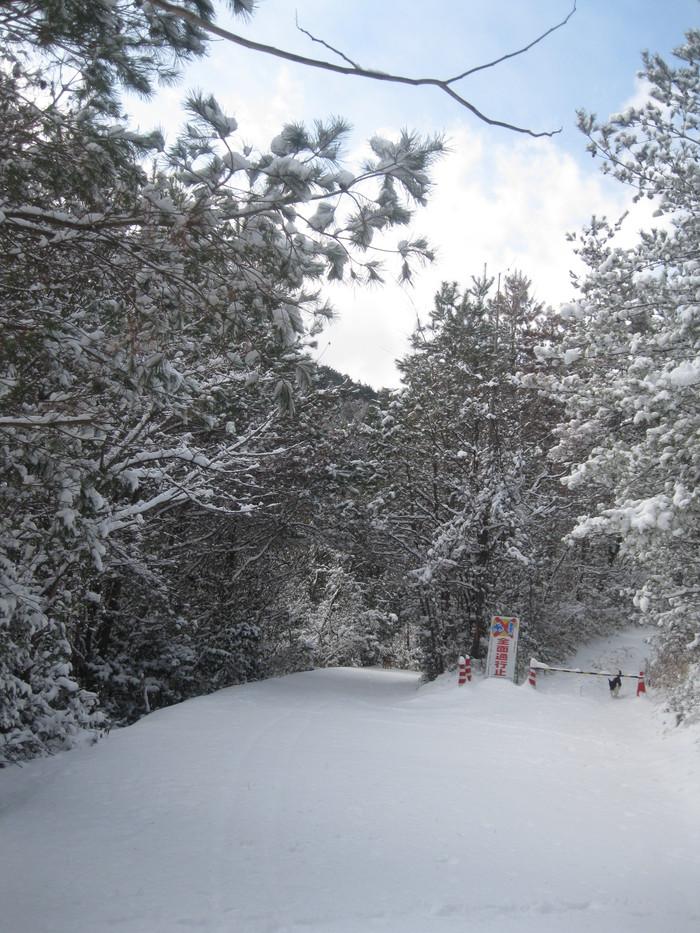 雪景色_a0125419_1155390.jpg
