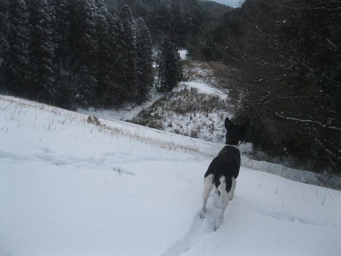 雪景色_a0125419_1193372.jpg