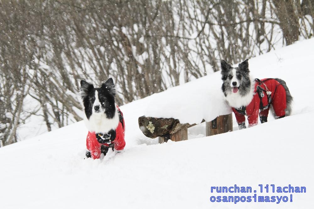 雪でもへっちゃら!_b0192121_18181789.jpg
