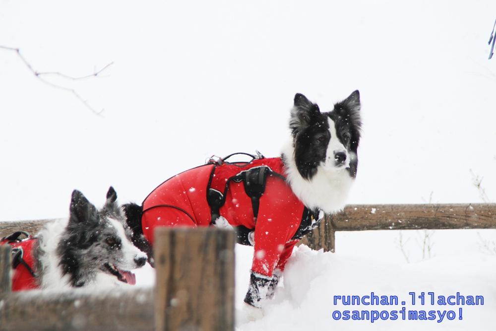雪でもへっちゃら!_b0192121_18182531.jpg