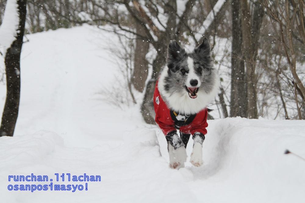 雪でもへっちゃら!_b0192121_18183574.jpg