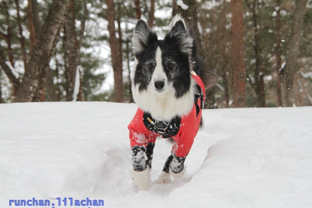 雪でもへっちゃら!_b0192121_1818984.jpg