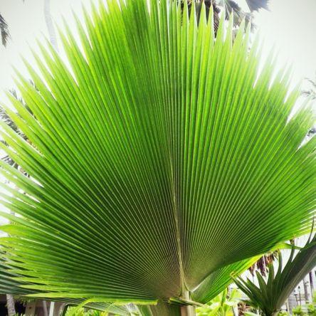 瞑想 Hawaii_a0224731_059524.jpg
