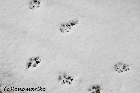 雪とバブーの足跡_c0024345_9341126.jpg