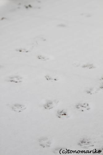 雪とバブーの足跡_c0024345_934426.jpg