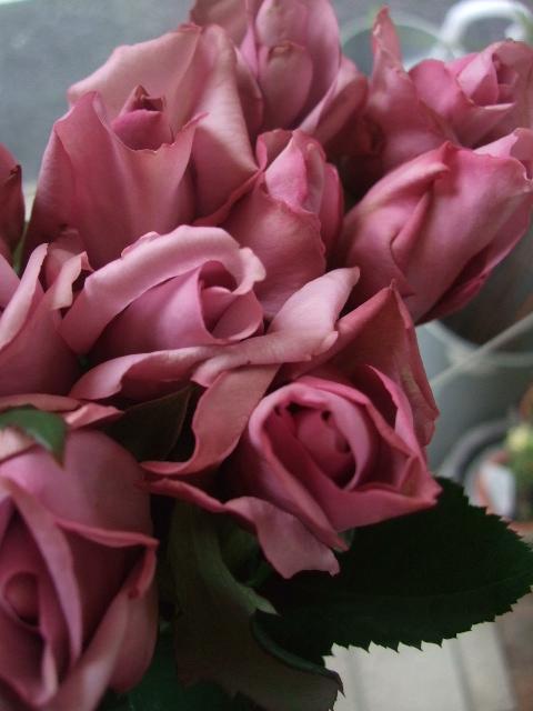 オークリーフ(微妙な花色)_f0049672_12411591.jpg