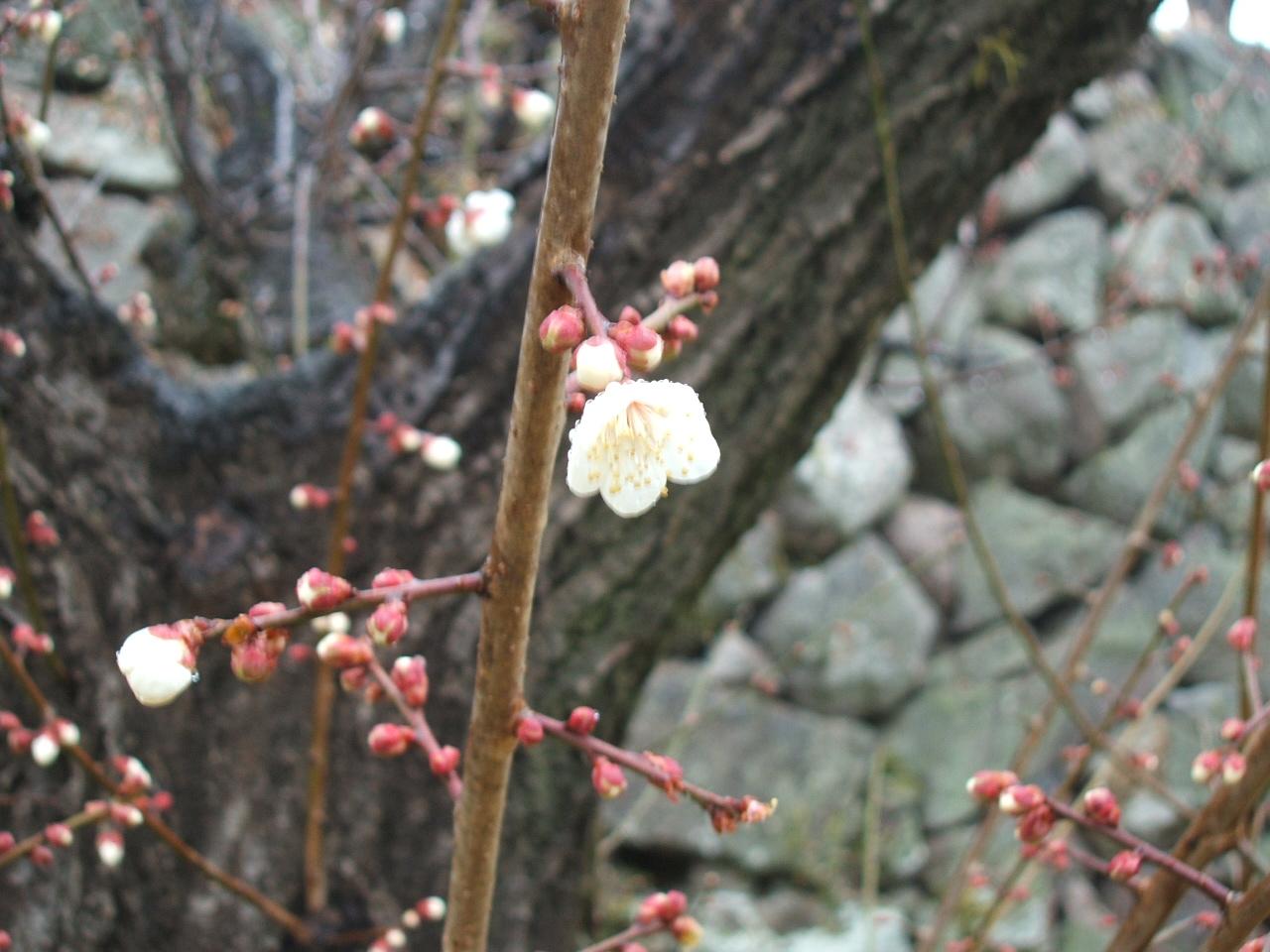春めっけ_c0052876_0275259.jpg