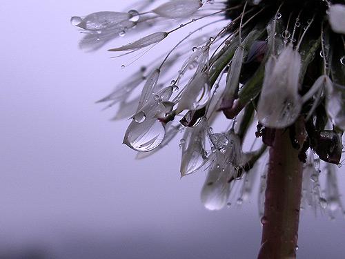 雨だよ_a0013879_23215751.jpg