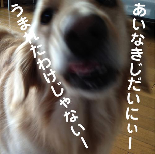 c0085188_15414858.jpg