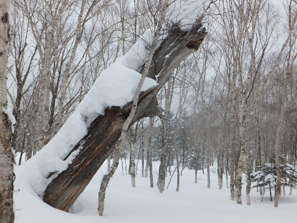 2月6日、多峰古峰山から美笛トンネルをピストン_f0138096_22551169.jpg