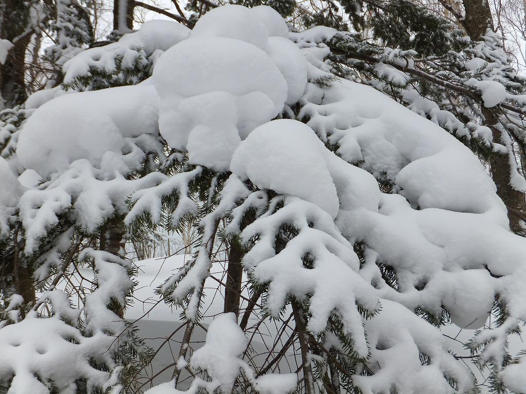 2月6日、多峰古峰山から美笛トンネルをピストン_f0138096_22552461.jpg