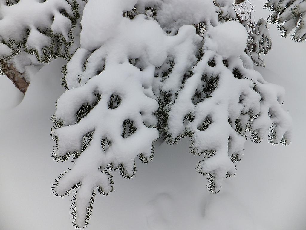 2月6日、多峰古峰山から美笛トンネルをピストン_f0138096_22553778.jpg