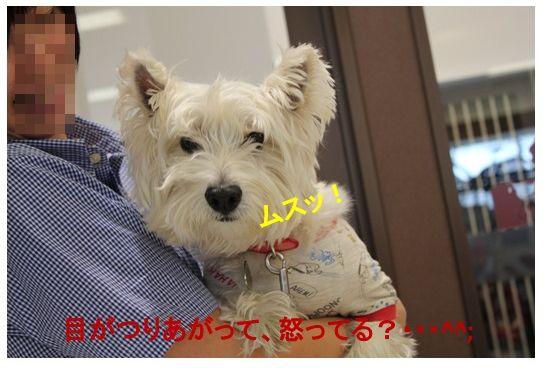 綺麗になったよ~!(^^)!_a0161111_20185431.jpg