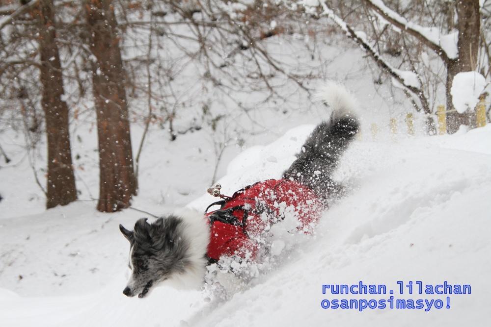 笑む犬グランプリ_b0192121_1944687.jpg