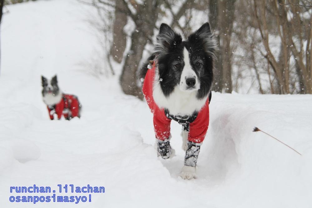 笑む犬グランプリ_b0192121_1951938.jpg