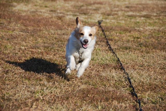 2/4 京子アルシャー「動物福祉」&「犬学」セミナーの模様_c0099133_247456.jpg