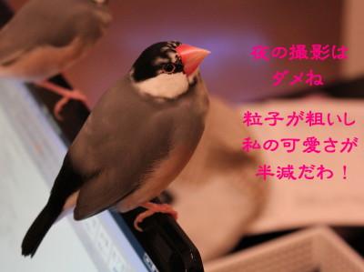b0158061_21231916.jpg