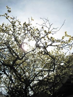 蝋梅の季節_f0061394_13134388.jpg