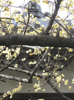 蝋梅の季節_f0061394_13251361.jpg
