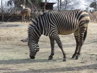動物園に行ってきました!_e0116207_14494138.jpg