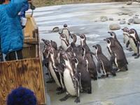 動物園に行ってきました!_e0116207_1450247.jpg