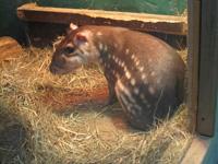 動物園に行ってきました!_e0116207_1734142.jpg