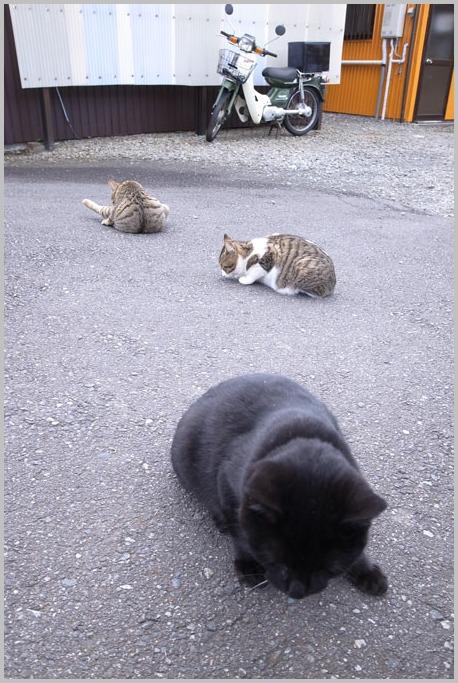 野良猫たち_d0006718_22341247.jpg