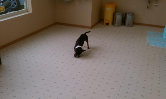 土浦の室内ドッグラン、WANDRY!_a0091865_1712945.jpg