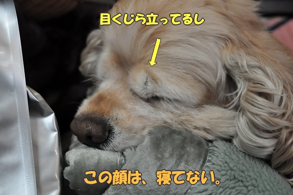 b0067012_14355176.jpg