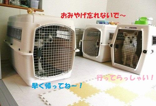 f0121712_12334516.jpg