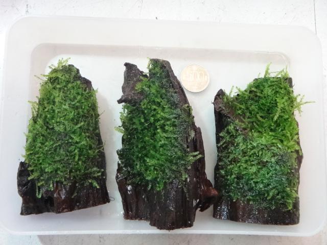 120209 熱帯魚・水草_f0189122_131490.jpg