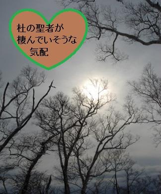 a0206332_99176.jpg
