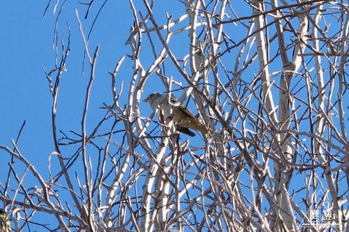 215 Tucson ~AZで新種ゲット~_c0211532_1455756.jpg