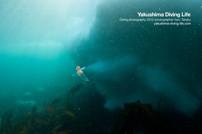 日本の海を巡る旅・北海道・知床編_b0186442_1416430.jpg