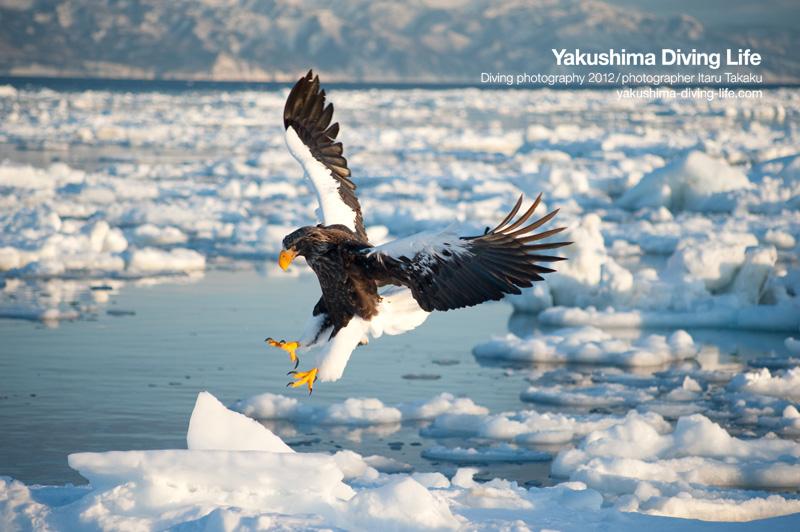 日本の海を巡る旅・北海道・知床編_b0186442_14194765.jpg