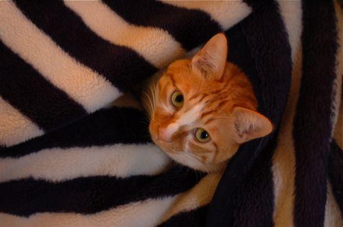 本日の猫の巣_c0185674_18394226.jpg