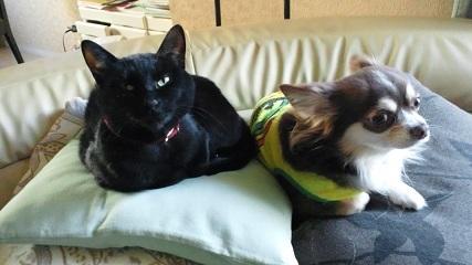 犬と猫_e0128485_19252456.jpg