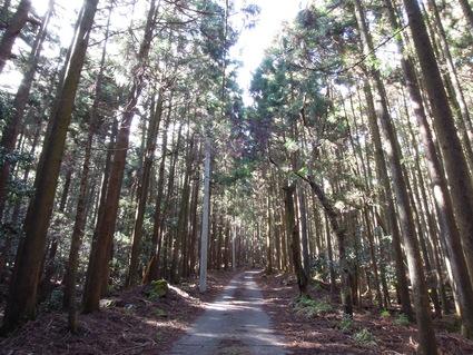 セラピーロード ~二の足林道コース~_e0231387_17163962.jpg