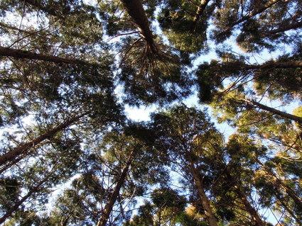 セラピーロード ~二の足林道コース~_e0231387_17374013.jpg