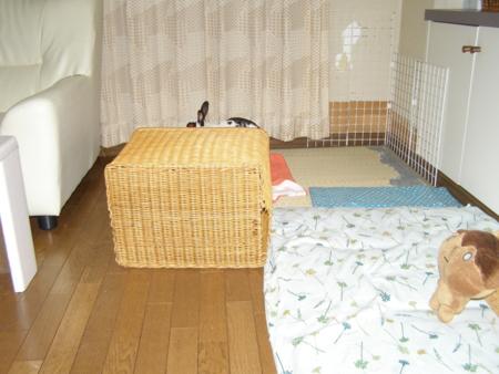 f:id:buchiusagi:20110523231825j:image