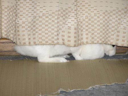 f:id:buchiusagi:20110523213334j:image