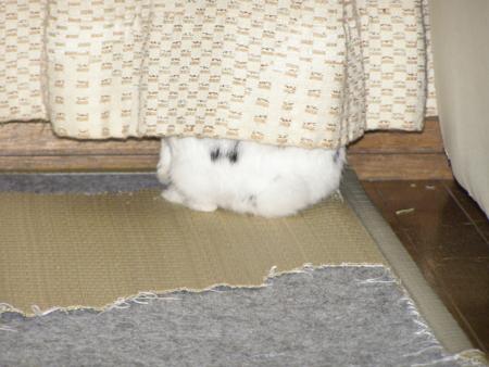 f:id:buchiusagi:20110523213306j:image