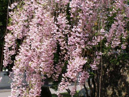 f:id:buchiusagi:20110524133505j:image