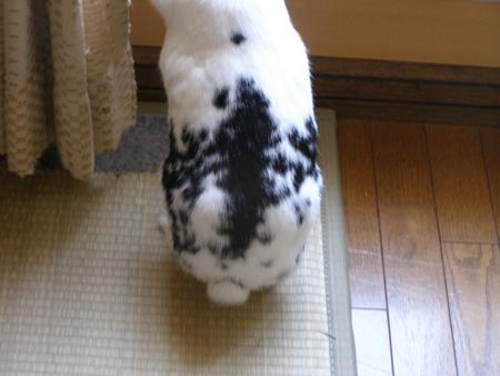 f:id:buchiusagi:20110607134954j:image