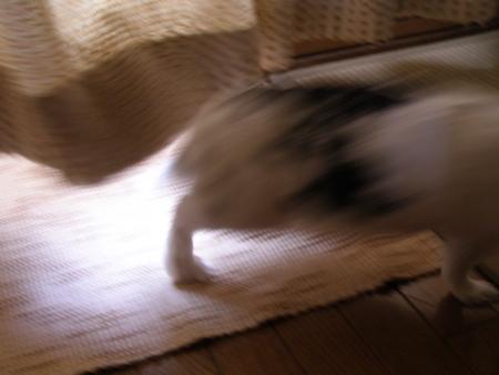 f:id:buchiusagi:20110725162535j:image