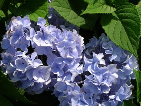 f:id:buchiusagi:20110725162823j:image