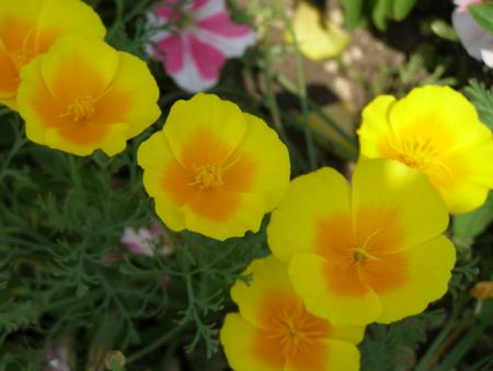 f:id:buchiusagi:20110725163347j:image